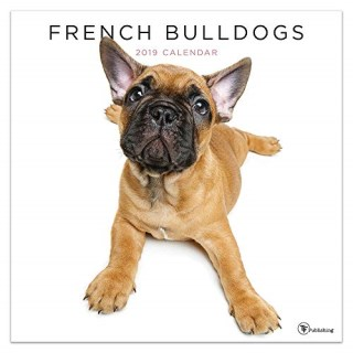 French Bulldog Puppies And Dogs For Sale Adoption Near You In Virginia