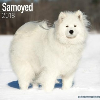 Samoyed Calendar - Dog Breed Calendars - 2017 - 2018 wall Calendars - 16 Month by Avonside
