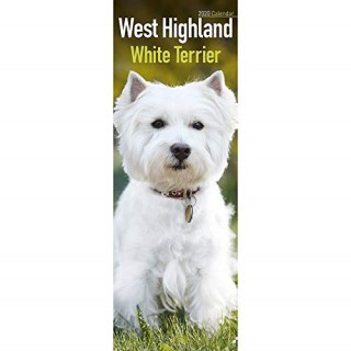 Welch Jolly Westies, West Highland White Terrier Breeder for sale Wyoming USA