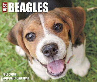 Just Beagles 2018 Box Calendar (Dog Breed Calendar)