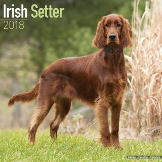 Irish Setter Calendar - Dog Breed Calendars - 2017 - 2018 wall Calendars - 16 Month by Avonside