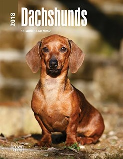 Dachshunds 2018 6 x 7.75 Inch Weekly Engagement Calendar, Animals Dog Breeds
