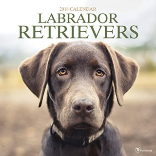 2018 Labrador Retriever Wall Calendar