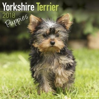 Yorkshire Terrier Puppies Calendar - Dog Breed Calendars - 2017 - 2018 wall Calendars - 16 Month by Avonside