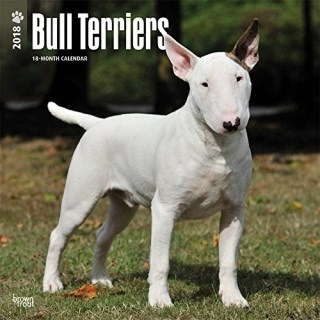 Bull Terriers 2018 12 x 12 Inch Monthly Square Wall Calendar, Animals Dog Breeds Terriers (Multilingual Edition)