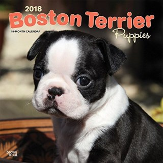 Boston Terrier Puppies 2018 12 x 12 Inch Monthly Square Wall Calendar, Animals Dog Breeds Terrier Puppies (Multilingual Edition)