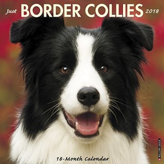 Just Border Collies 2018 Wall Calendar (Dog Breed Calendar)