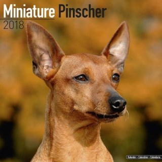 Miniature Pinscher Calendar - Dog Breed Calendars - 2017 - 2018 wall Calendars - 16 Month by Avonside
