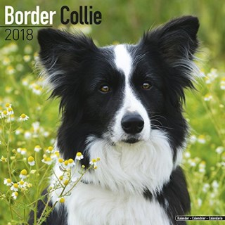 Border Collie Calendar - Dog Breed Calendars - 2017 - 2018 wall Calendars - 16 Month by Avonside