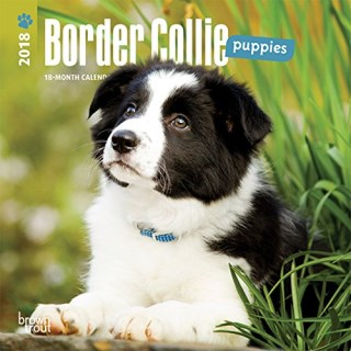 Border Collie Puppies 2018 7 x 7 Inch Monthly Mini Wall Calendar, Animals Dog Breeds Collie Puppies (Multilingual Edition)