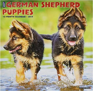 Search For German Shepherd Dog Puppies And Dogs Near You Page 8