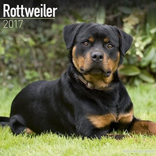 Rottweiler Calendar - Dog Breed Calendars 2017 - Dog Calendar - Calendars 2016 - 2017 wall calendars - 16 Month Wall Calendar by Avonside