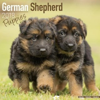 German Shepherd Puppies Calendar - Dog Breed Calendars - 2017 - 2018 wall Calendars - 16 Month by Avonside