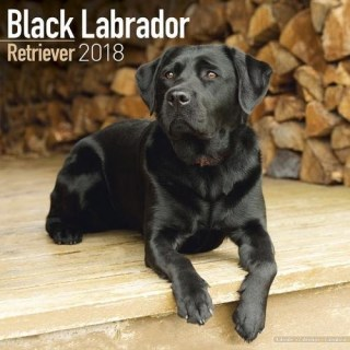 Black Labrador Retriever Calendar - Dog Breed Calendars - 2017 - 2018 wall Calendars - 16 Month by Avonside