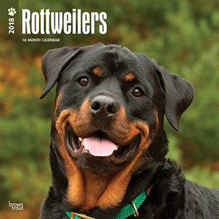 Rottweilers 2018 12 x 12 Inch Monthly Square Wall Calendar, Animals Dog Breeds (Multilingual Edition)