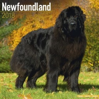 Newfoundland Calendar - Dog Breed Calendars - 2017 - 2018 wall Calendars - 16 Month by Avonside