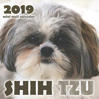 Nor Lea Shelties Shih Tzu Of New York Shih Tzu Breeder In