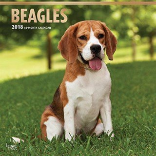 Beagles 2018 12 x 12 Inch Monthly Square Wall Calendar with Foil Stamped Cover, Animals Dog Breeds (Multilingual Edition)