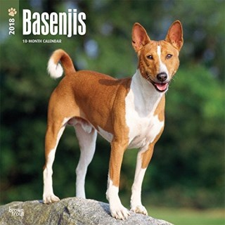 Basenjis 2018 12 x 12 Inch Monthly Square Wall Calendar, Animals Dog Breeds (Multilingual Edition)