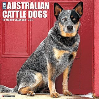Australian Cattle Dog Breeders In Texas Freedoglistings