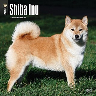 Shiba Inu 2018 12 x 12 Inch Monthly Square Wall Calendar, Animals Asian Dog Breeds (Multilingual Edition)