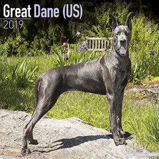 Mature great danes for sale florida