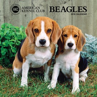 American Kennel Club Beagles 2018 Wall Calendar