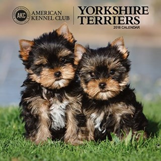 American Kennel Club Yorkshire Terriers 2018 Wall Calendar