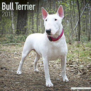 Bull Terrier Calendar - Dog Breed Calendars - 2017 - 2018 wall Calendars - 16 Month by Avonside
