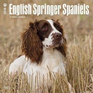English Springer Spaniels International Edition 2018 12 x 12 Inch Monthly Square Wall Calendar, Animals Dog Breeds