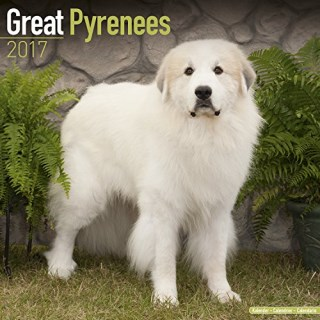 Great Pyrenees Calendar 2017 - Dog Breed Calendars - 2016 - 2017 wall calendars - 16 Month by Avonside
