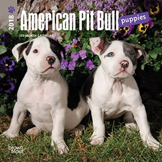 American Pit Bull Terrier Puppies 2018 7 x 7 Inch Monthly Mini Wall Calendar, Animals Dog Breeds (Multilingual Edition)