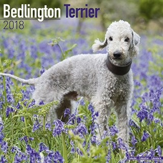 Bedlington Terrier Calendar - Dog Breed Calendars - 2017 - 2018 wall Calendars - 16 Month by Avonside