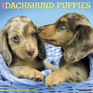 Just Dachshund Puppies 2018 Calendar