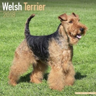 Welsh Terrier Georgia Welsh Terrier Breeders...