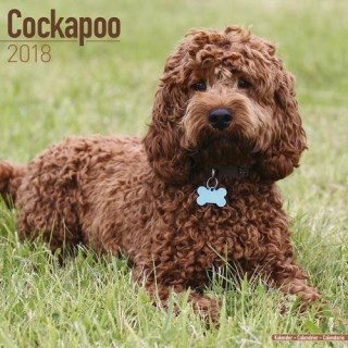 Cockapoo Calendar - Dog Breed Calendars - 2017 - 2018 wall Calendars - 16 Month by Avonside