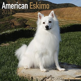 American Eskimo Calendar - Dog Breed Calendars - 2017 - 2018 wall Calendars - 16 Month by Avonside