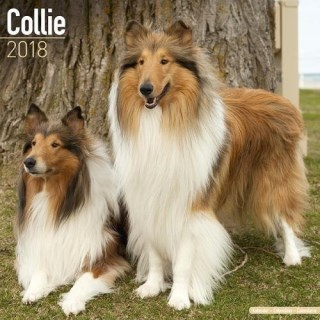 Collie Calendar - Dog Breed Calendars - 2017 - 2018 wall Calendars - 16 Month by Avonside
