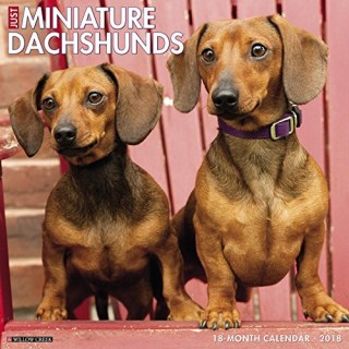 Just Miniature Dachshunds 2018 Calendar