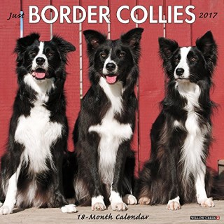 Border Collie Calendar