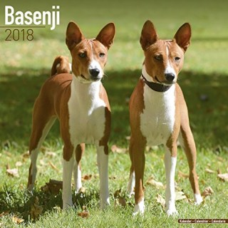 Basenji Calendar - Dog Breed Calendars - 2017 - 2018 wall Calendars - 16 Month by Avonside