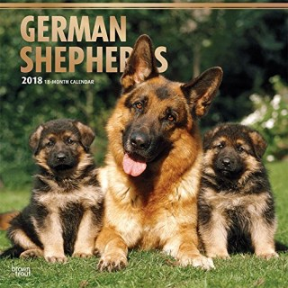 German Shepherds 2018 12 x 12 Inch Monthly Square Wall Calendar with Foil Stamped Cover, Animals Dog Breeds (Multilingual Edition)