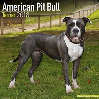 American Pit Bull Terrier Calendar - Dog Breed Calendars - 2017 - 2018 wall Calendars - 16 Month by Avonside