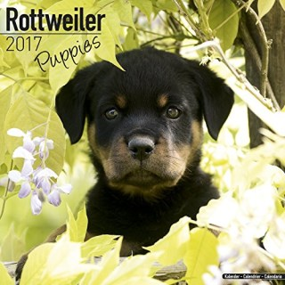 Rottweiler Puppies Calendar - Puppies Calendar - Dog Breed Calendars 2017 - Dog Calendar - Calendars 2016 - 2017 wall calendars - 16 Month Wall Calendar by Avonside