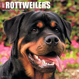 Just Rottweilers 2017 Wall Calendar by Willow Creek Press (2016-07-31)