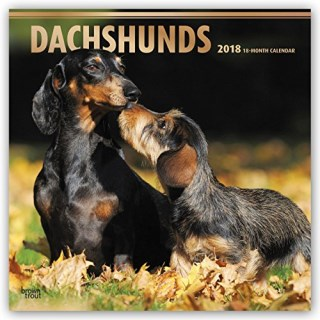 Dachshunds 2018 12 x 12 Inch Monthly Square Wall Calendar with Foil Stamped Cover, Animals Dog Breeds