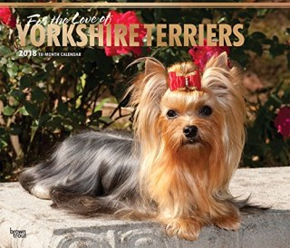 For the Love of Yorkshire Terriers 2018 14 x 12 Inch Monthly Deluxe Wall Calendar with Foil Stamped Cover, Animal Small Dog Breeds (English, French and Spanish Edition)