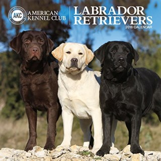 American Kennel Club Labrador Retrievers 2018 Wall Calendar