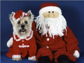 Pet Star Cards - Cairn & Santa Christmas