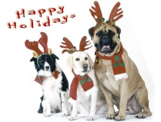 Pet Star Christmas Cards - Border Collie, Labrador, & Mastiff